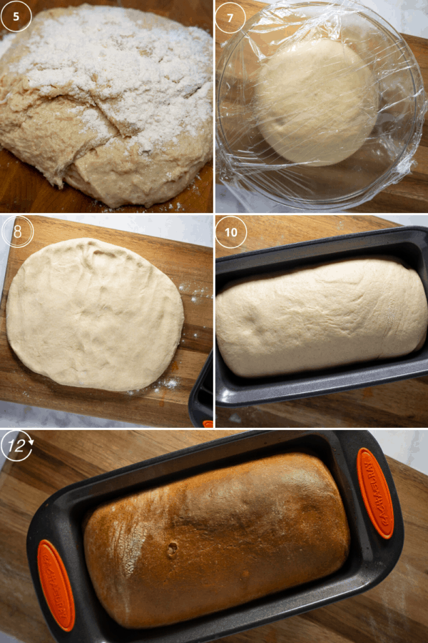 White Whole Wheat bread recipe in stages, dough with flour on it, then dough covered to rise, then dough pressed flat on cutting board, then dough rolled up in a pan, then the bread golden brown and baked.