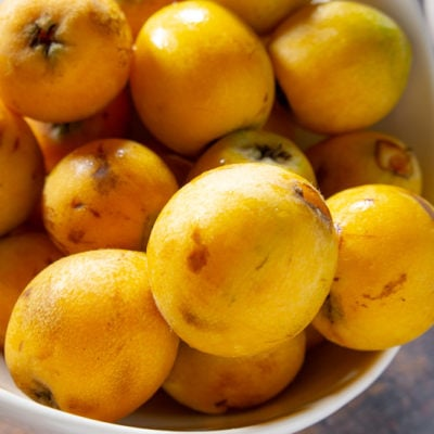 What Is a Loquat?